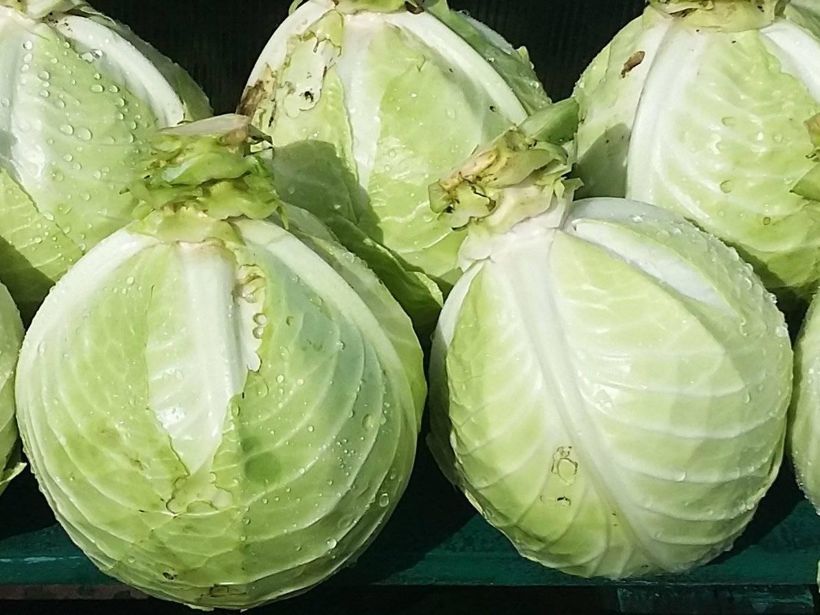 Как хранить цветную капусту в холодильнике: как правильно и сколько, чтобы она не темнела, каков срок хранения овоща в домашних условиях?