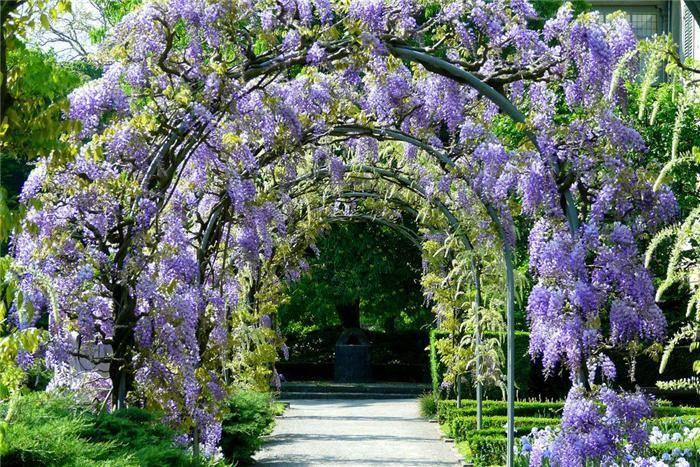 Плетущиеся и вьющиеся растения для сада (43 фото): многолетние цветы, однолетники, вьюнки на даче, новые названия, арки