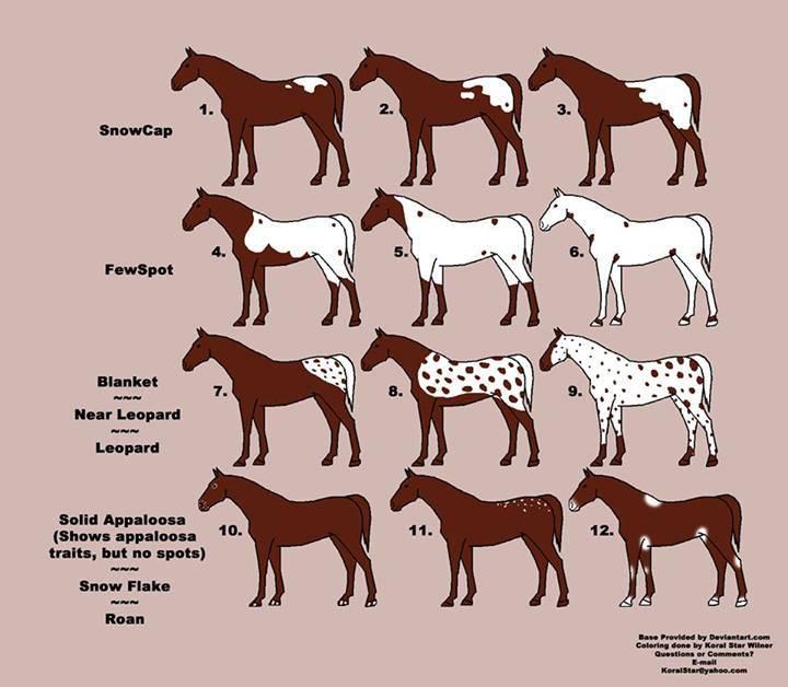 Необычная и редкая чалая масть лошадей