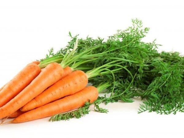 Морковь раннеспелая, средняя и поздняя: сорта этого корнеплода по сроку созревания, а также какие из них самые сладкие, как выбрать семена для открытого грунта? русский фермер