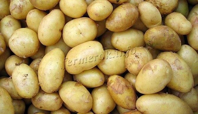 Картофель киви химия или нет: описание, характеристика сорта, отзывы и фото
