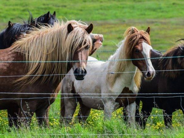 Лошади степных пород: описание   конный портал