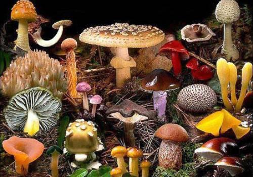 Грибы беларуси: съедобные, ядовитые и весенние виды