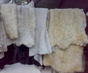 Выделка овечьей шкуры в домашних условиях: описание — selok.info