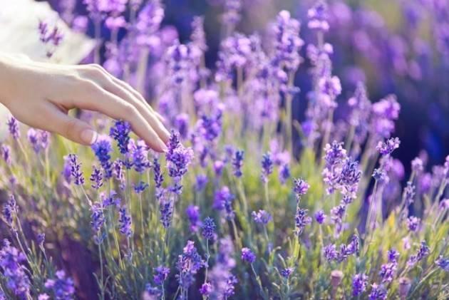 Шалфей на рассаду: когда и как сажать семена, особенности ухода