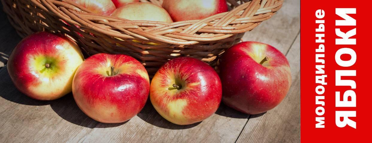 Сколько сахара в яблоке: повышают ли уровень в крови