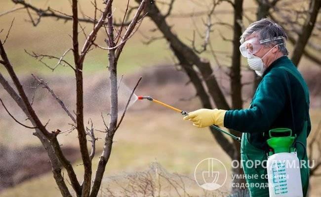 Болезни яблонь и их лечение, средства для защиты и профилактики