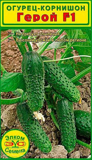 Огурец анзор ранний и урожайный популярные огурцы анзор и артист от компании beyo купить семена огурцов анзор лучшая на гибрид анзор f1 цена