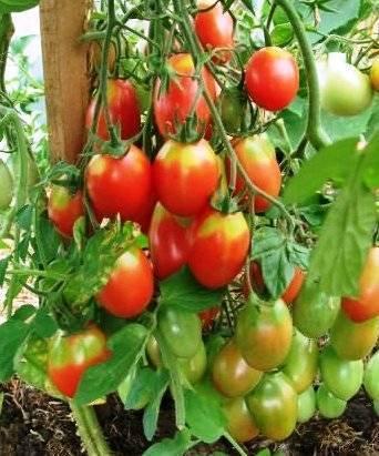 Сроки посадки помидоров на рассаду в сибири в 2021 году: благоприятные дни - сад и огород
