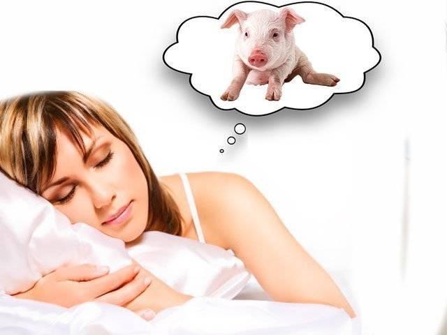 «сонник свинья приснилась, к чему снится во сне свинья»