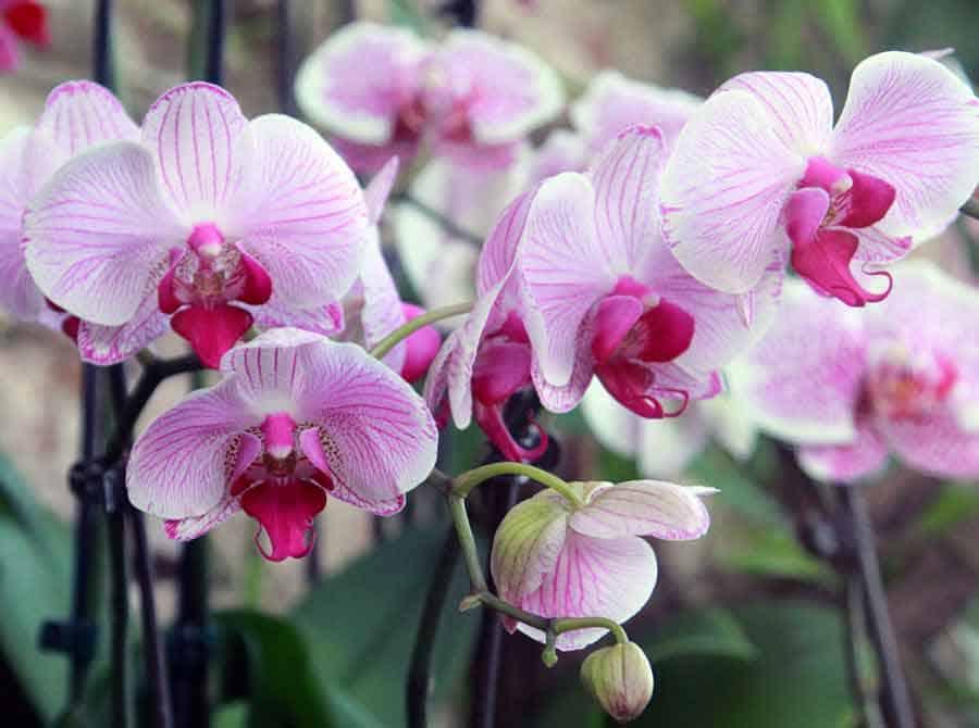 Уход за орхидеями в горшке в домашних условиях: как поливать купленную и комнатную, фото и видео от специалистов