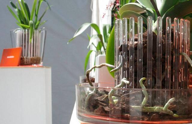 Кашпо для орхидеи: для чего нужно, какое оно должно быть, керамическое или прозрачное, пластиковое или стеклянное, как сделать своими руками?дача эксперт