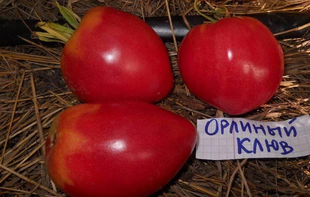 Томат орлиный клюв: отзывы, фото, урожайность, описание и характеристика | tomatland.ru
