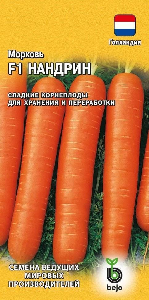 Какие сорта моркови вас порадовали? хочу купить семена. / асиенда.ру