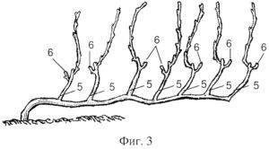 Как подрезать виноград: детальная схема обрезки