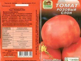 Выращивание томата розовый слон