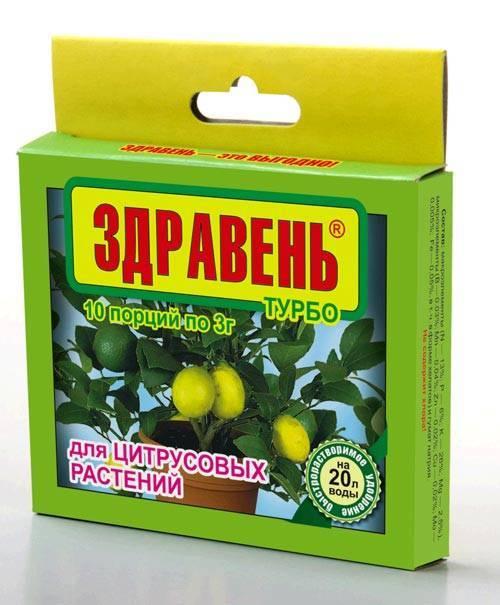 Домашние удобрения для комнатных растений: топ-20 средств!
