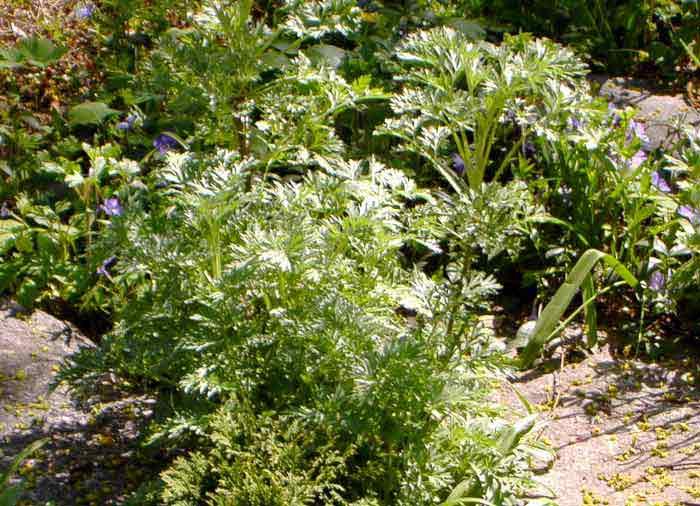 Травы для очищения кишечника | компетентно о здоровье на ilive