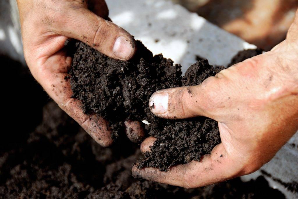 Какая почва нужна для огурцов и помидоров
