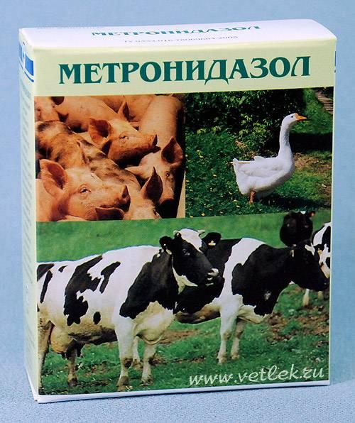 Метронидазол для цыплят и кур: описание, характеристика — selok.info