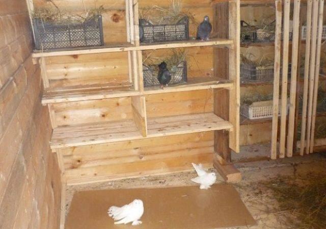 ✅ вальер для голубей. вольеры для голубей своими руками фото - живой-сад.рф