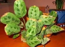Почему желтеют листья у комнатных растений в домашних условиях?