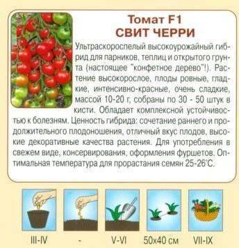 Лучшие сорта томатов черри для теплицы и открытого грунта: описание и характеристика