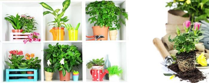 Общие правила ухода за комнатными растениями в домашних условиях: их пересадка, советы по выращиванию
