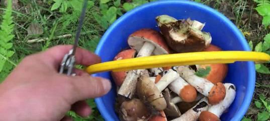 Грибы башкирии фото. съедобные и несъедобные грибы башкирии и их описание (+36 фото)