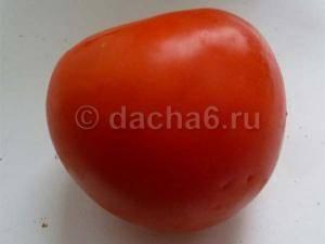 Ранние дружные помидоры «агата»: урожайность и сортовые характеристики