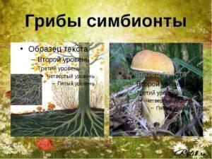 Классификация грибов: симбионты, сапрофиты, паразиты, отличительные признаки, особенности питания, съедобные виды, значение