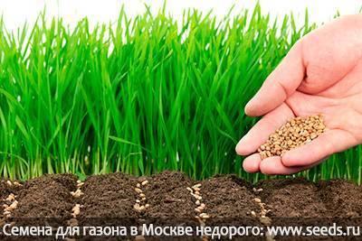 Когда сеять газонную траву - осенью или весной