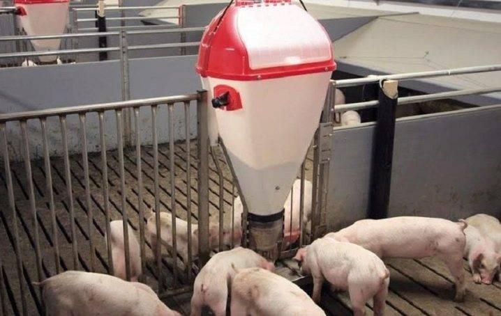 Как сделать и установить своими руками поилки для свиней
