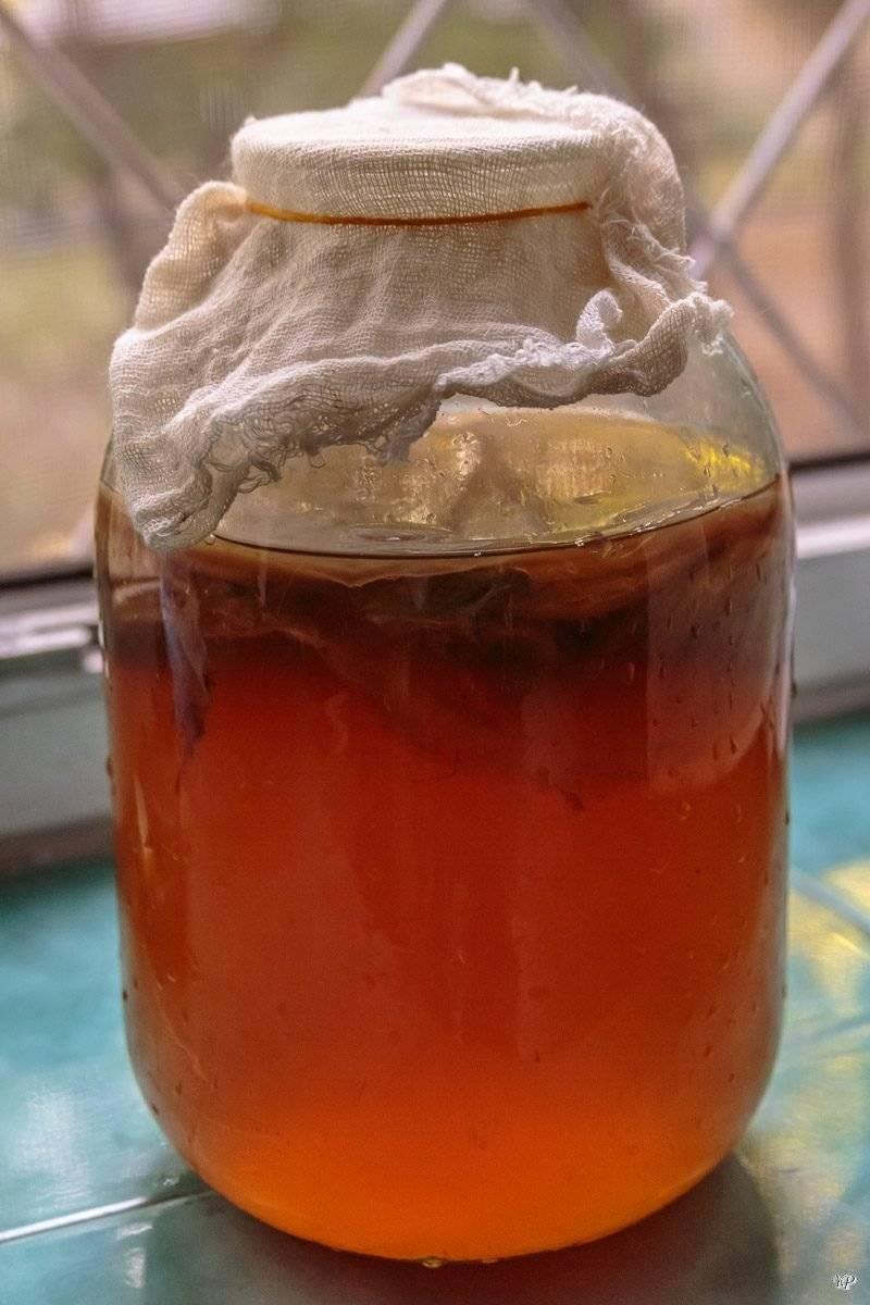 Чайный гриб: как ухаживать и употреблять
