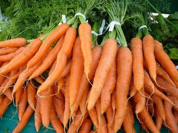 Болезни моркови при выращивании и вредители: как бороться народными средствами, видео и фото