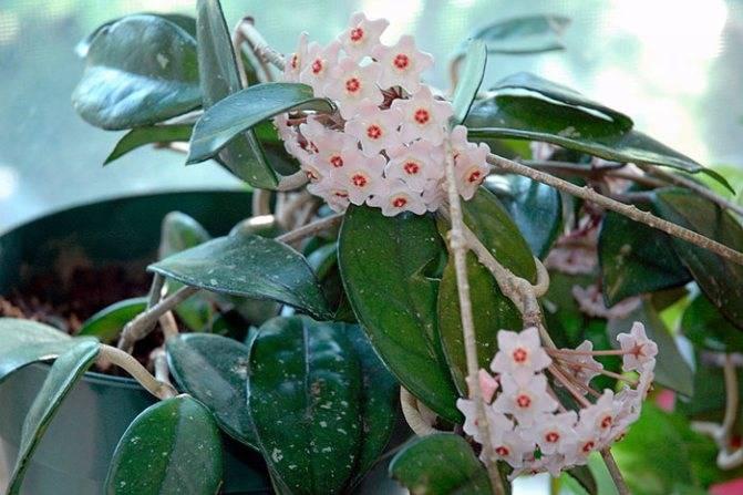 Алоэ: приметы и суеверия, можно ли держать цветок в доме, магические свойства растения