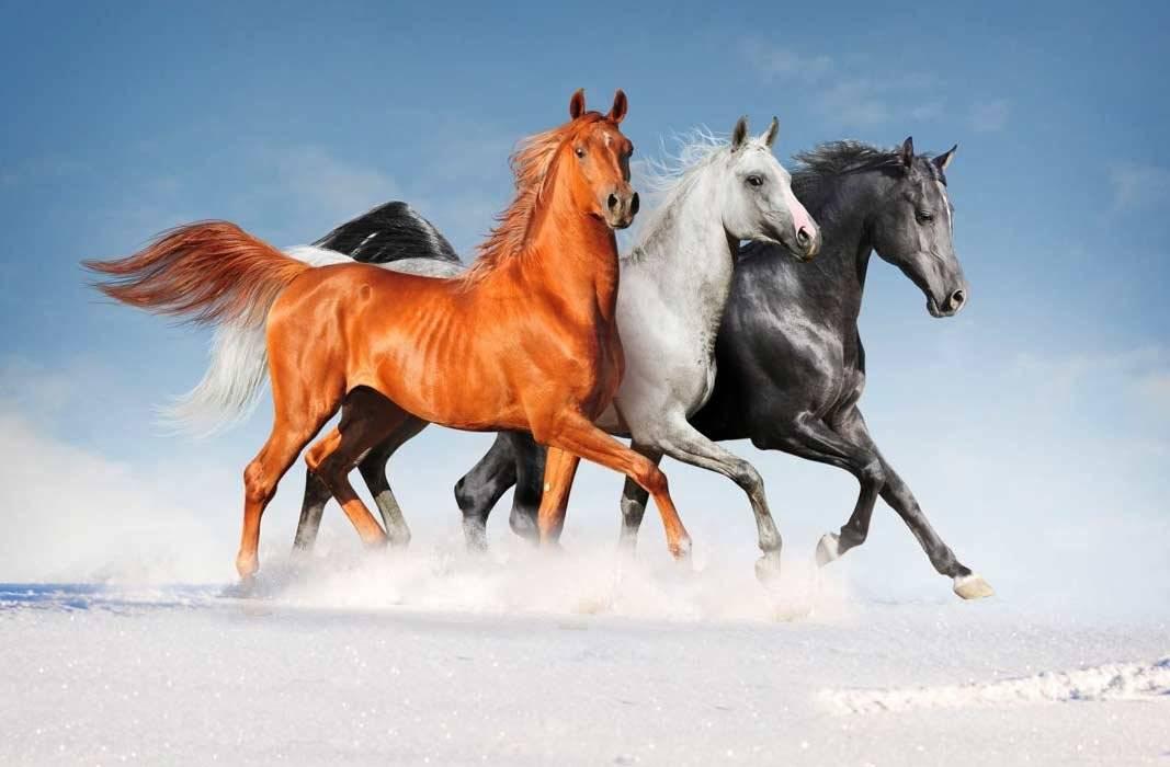 Самые интересные факты о лошадях   vivareit