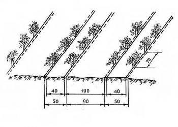 Выращивание баклажанов в открытом грунте: любительское руководство