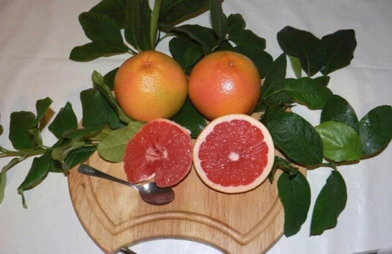 Как растет грейпфрут в домашних условиях