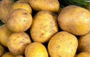 Картофель метеор: описание и характеристика сорта, фото, отзывы