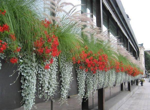 Ампельные растения для дома и балкона