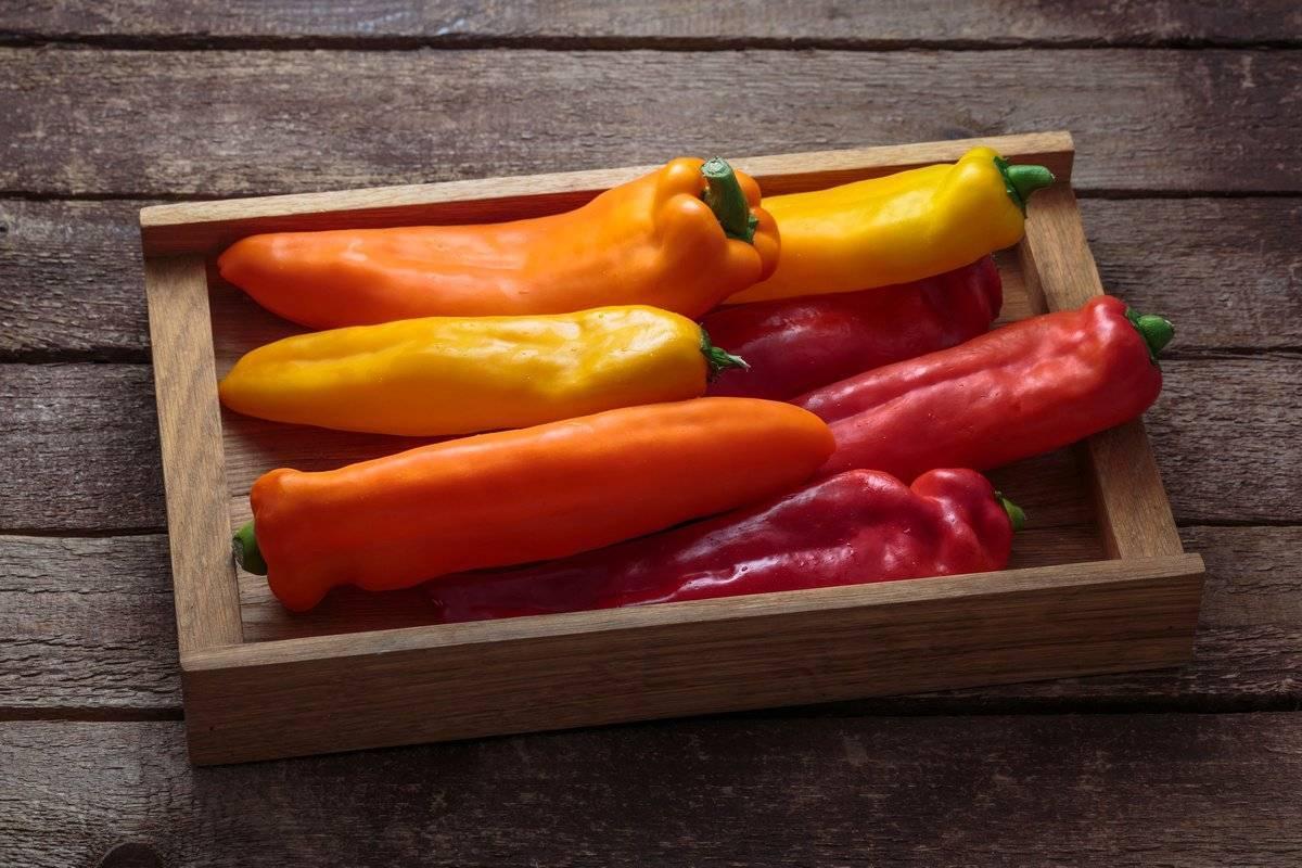 Как вырастить вкусный болгарский перец в домашних условиях