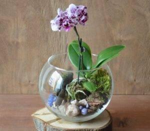 Орхидея в аквариуме: как выращивать, поливать и ухаживать за цветком, как растёт без воды, фото и видео от специалистов