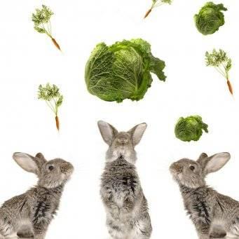 Можно ли давать кроликам капустные листья