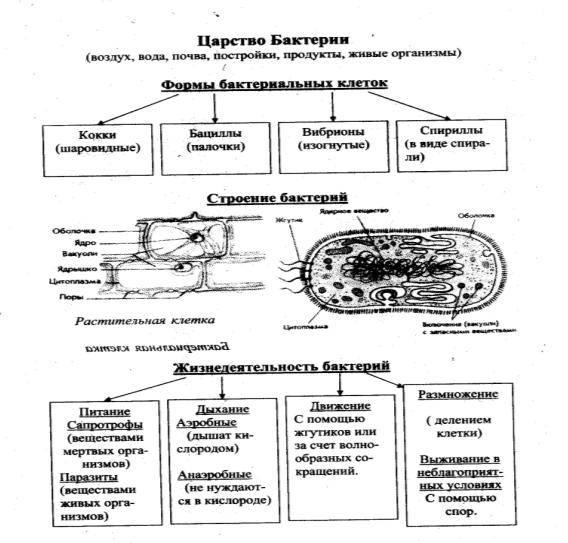 Каковы общие признаки грибов и чем они отличаются от растений и животных?