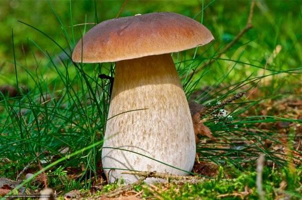 Какие грибы собирают в августе, а какие в сентябре подсказали опытные грибники