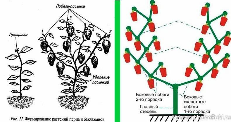 Выращивание перца в теплице из поликарбоната: полезные советы