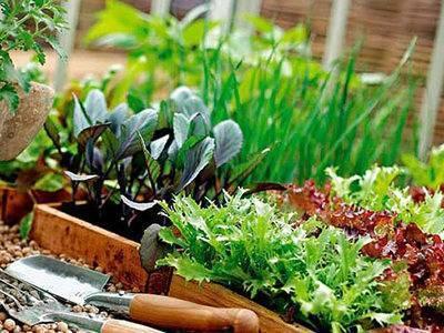 Гидропонные установки для выращивания зелени в домашних условиях