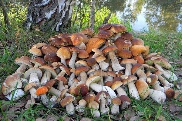 Съедобные грибы: виды, названия, калорийность и полезные свойства | food and health
