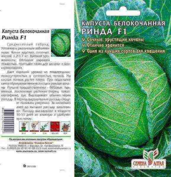 Лучшие сорта семян капусты для хранения и засолки